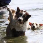 ayuden-a-perros-del-huracan