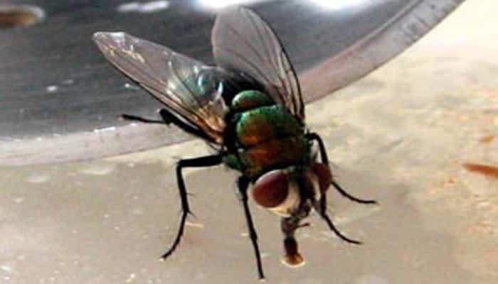 Insecticidas-Para-Moscas-5