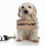 Perros-en-adopcion-adoptar-adopta-mascota